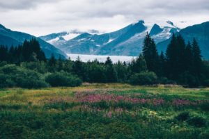 Image of Anchorage Alaska mountains in spring time with flowers overlooking a lake